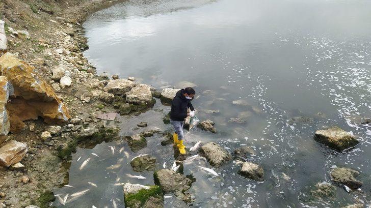 Tarsus'ta korkutan balık ölümleri! İnceleme başlatıldı