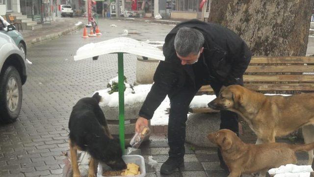 Başkan Cankul sokak hayvanlarını besledi