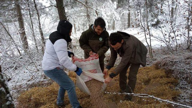 Bolu'da yaban hayvanları için ormanlara yem bırakıldı