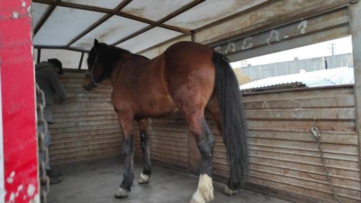 JASAT at hırsızlarını yakaladı