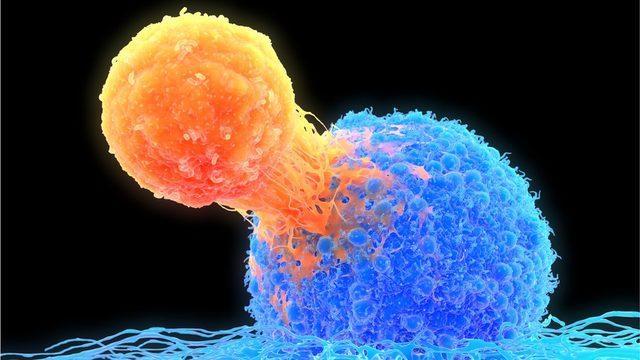 T hücreleri bir patojeni tespit edip öldürmekle görevli