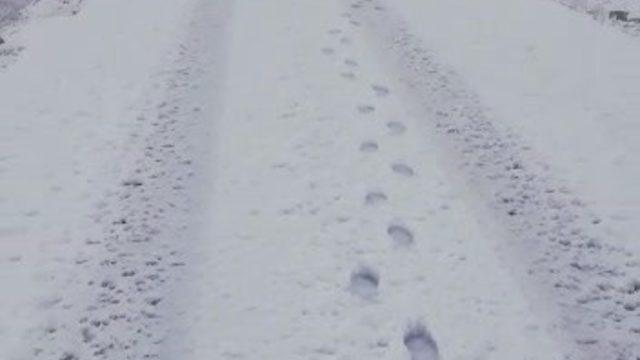 Gercüş'te kar yağışı hayatı durma noktasına getirdi