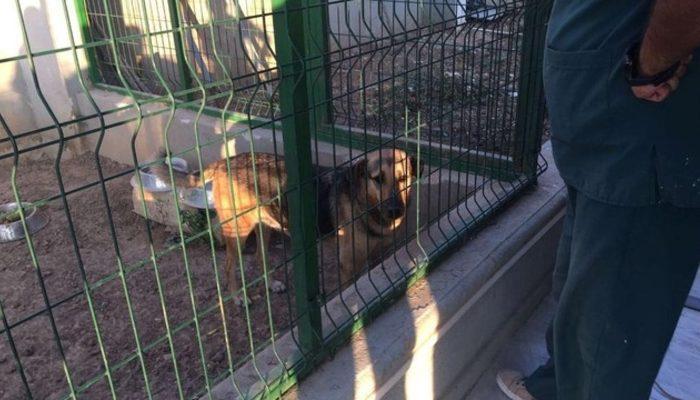Köpeğe tecavüz etti, serbest bırakıldı! Karara mahalleli tepkili...