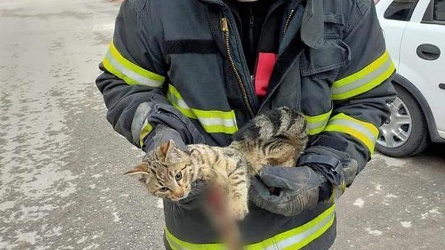 Yaralı kediye belediye şefkat eli uzattı