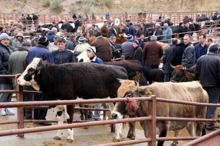 Nevşehir Hayvan Pazarı geçici olarak kapatıldı