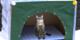 Kartondan kedi evi yapılışı! Onları soğuktan kurtarmaya ne dersiniz?