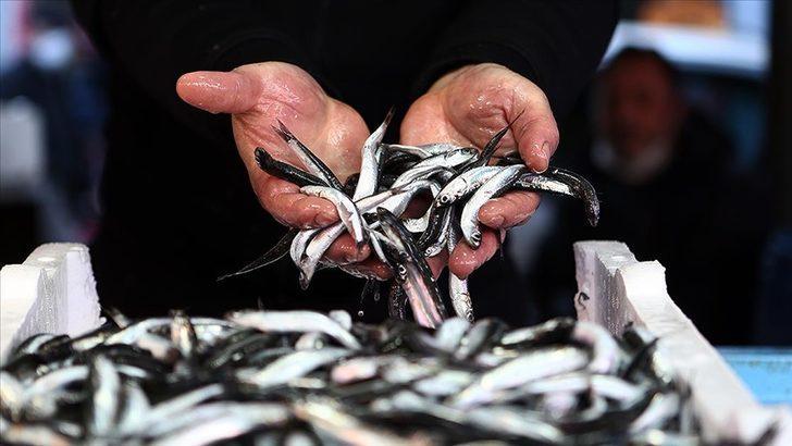 Tarım ve Orman Bakanlığı'ndan hamsi avına ilişkin yeni açıklama