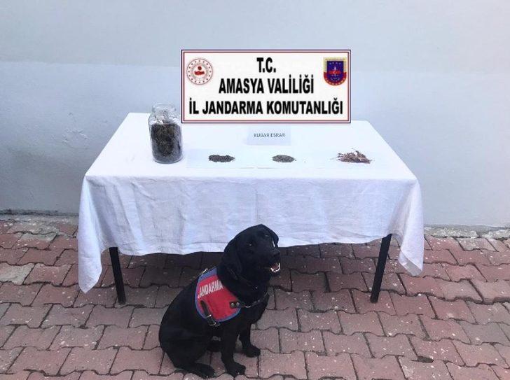Amasya'da uyuşturucu satıcılarına operasyon: 1 tutuklama