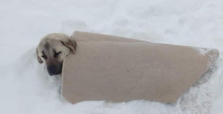 Yürekleri ısıtan görüntü! Köpeğin üzerine üşümesin diye halı örttü