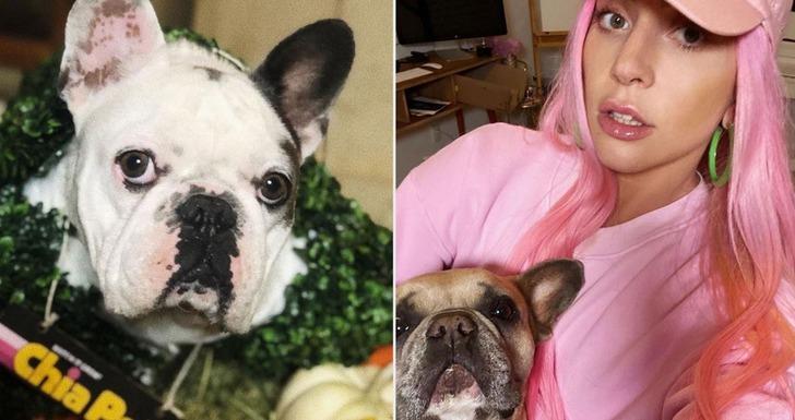 Lady Gaga'nın köpekleri bulundu! İşte rekor ödül...