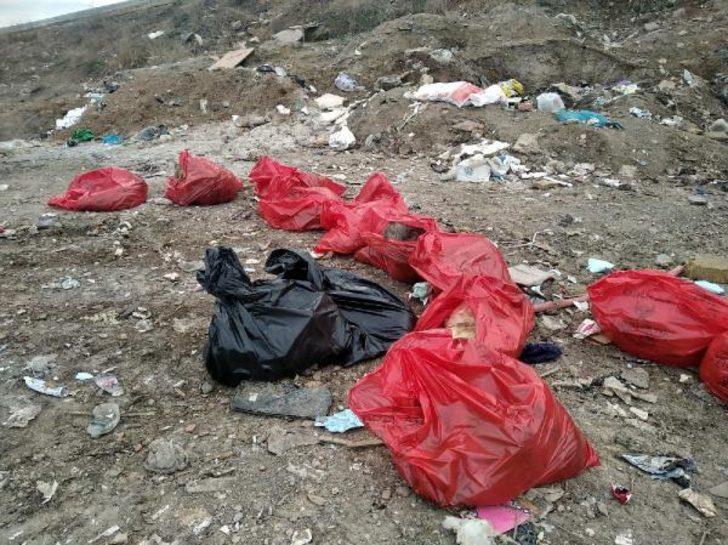 Ankara Barosu'ndan köpek ölümleriyle ilgili suç duyurusu