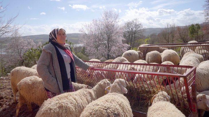 İthal ete rağmen hayvancılık: Balıkesir'de köylüler, hayvancılığın içinde bulunduğu şartları anlattı