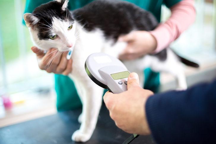 Evcil hayvan sahiplerine pasaport ve mikroçip zorunluluğu uyarısı
