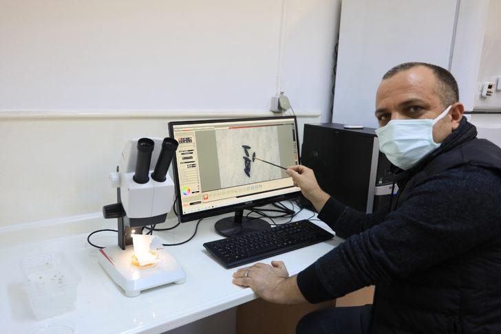 Sivrisinek koronavirüs taşır mı? Herkesin merak ettiği soru yanıt buldu
