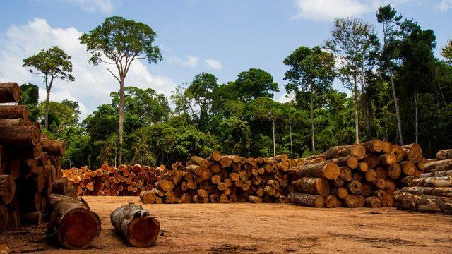 Ormanlık alanları işgal ederek ağaçları yakan kişiler, bu alanları tarım arazisi olarak satışa çıkarıyor.