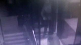 Pitbulla fabrika bekçisine saldırdılar