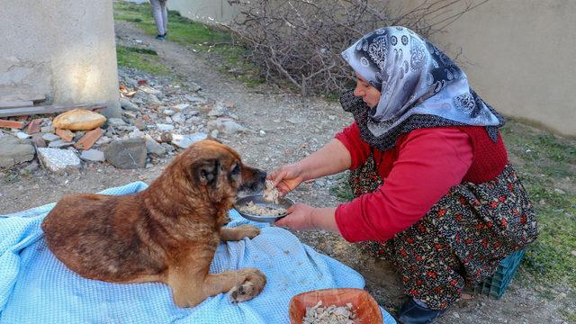 Hasta sandığı köpeği veterinere götürdü, büyük şok yaşadı