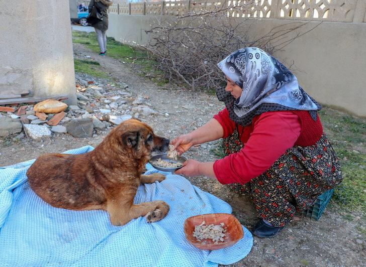 Veterinere götürülen köpeğin vücudunda yüzlerce saçma bulundu