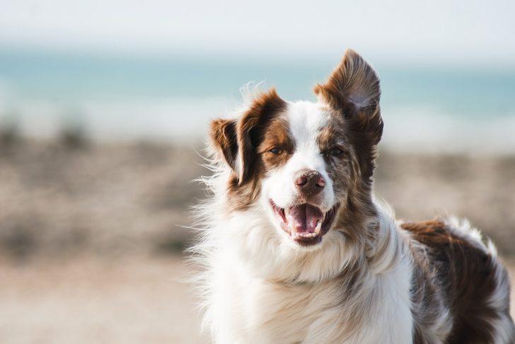 Tanımadığınız köpeklere dostane bir şekilde yaklaşmaya dair 10 ipucu!