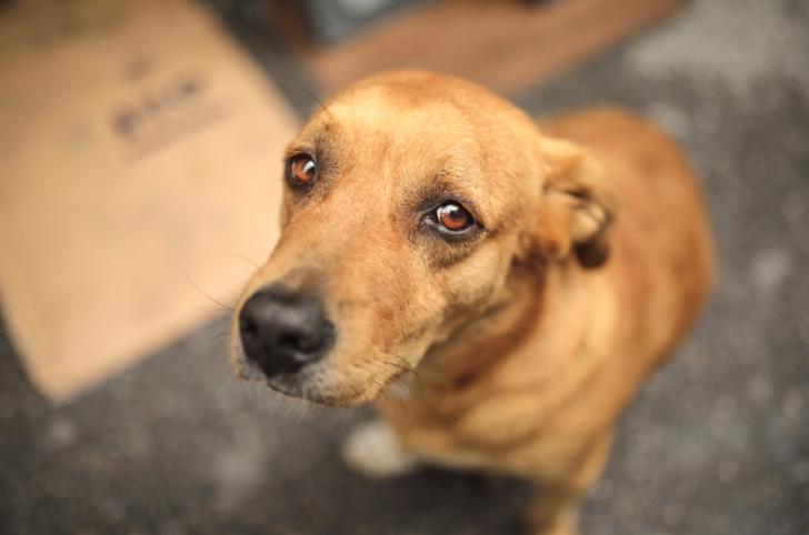 Antalya'da köpeğe tecavüz iddiası! 'Köpeğe mi tecavüz ediyorsun?' sorusuna  'git buradan' cevabı