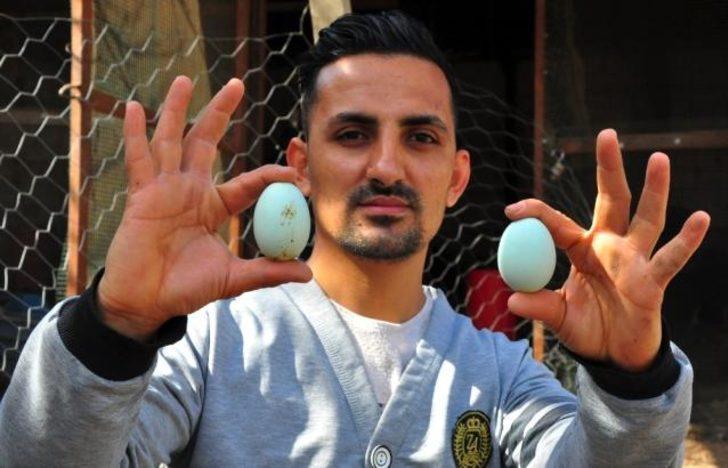 Amerika'dan getirttiği mavi yumurtalar hayatını değiştirdi! İşte mavi yumurtanın fiyatı!