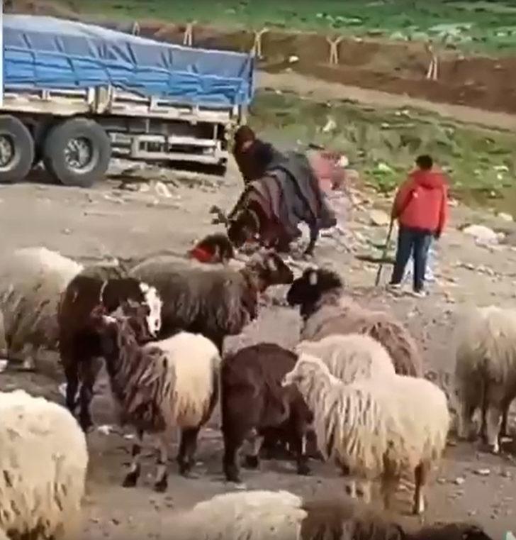 Eşeğini döven çobana para cezası! Eşek koruma altına alındı