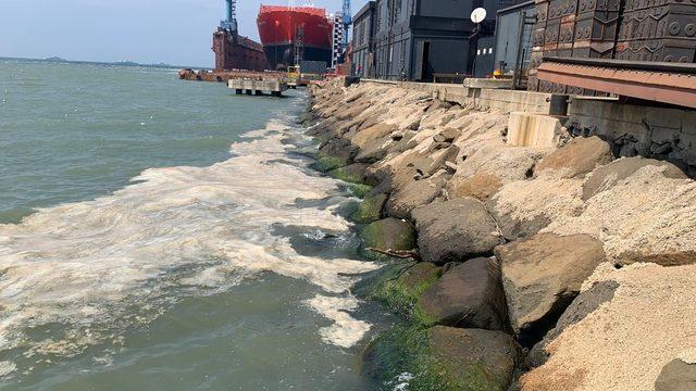 Denizdeki kirliliğin nedeni Alg Patlaması