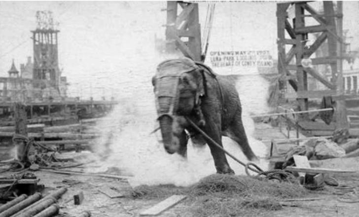 Edison'un önerisiyle 6600 volt elektrik verilerek idam edilen fil: Topsy