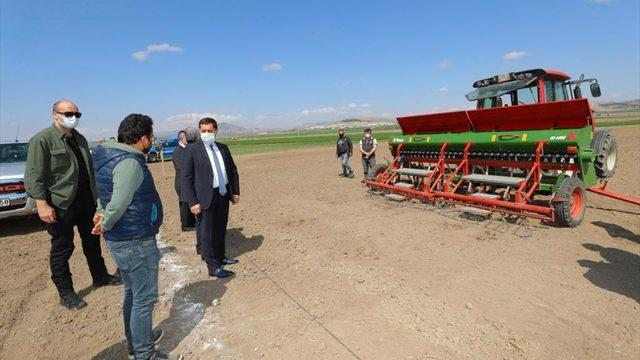 """Amasya'da yerli kenevir tohumu """"Vezir""""in ekimi yapıldı"""