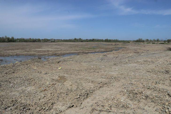 Sakarya'da 350 dekarlık arazide kenevir üretilecek