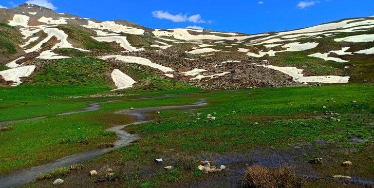 Yeşil ve beyazın tek bir yerde buluştuğu Şırnak yaylarına bahar geldi