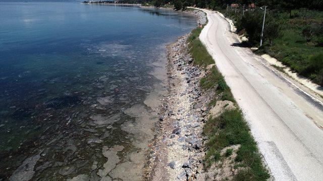 """Deniz salyası """"sahte dip yapısı"""" oluşturarak balıkları olumsuz etkiliyor"""