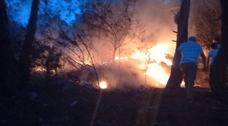 Bodrum'da zabıtanın fark ettiği orman yangını söndürüldü