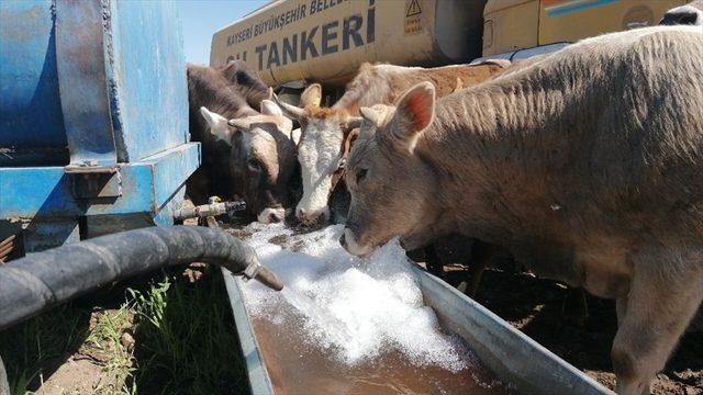 Kayseri'de Kovid-19 karantinasında bulunan besicinin hayvanlarının su ihtiyacını belediye karşıladı