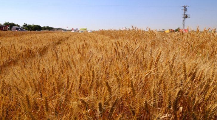 Buğday alım fiyatı ne kadar? 2021 arpa, hububat ve buğday alım fiyatları açıklandı...