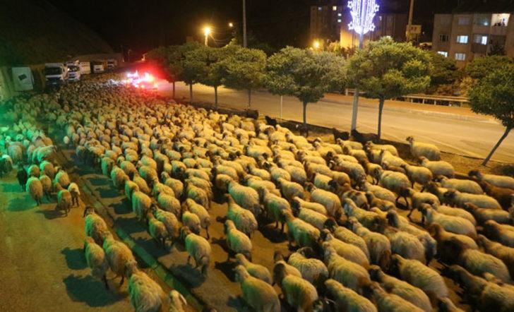 İlginç olay! Polis eskortluğunda 10 bin koyun yoldan böyle geçti