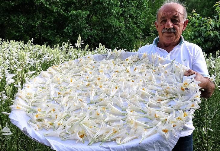 Tokat'ta üretti fiyatını duyan inanamadı! Zor geçiniyordu, emekli maaşını 5'e katladı