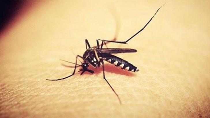 Batı Nil Virüsü nedir? Batı Nil Virüsü öldürür mü ve bulaşıcı mı? İşte belirtileri...