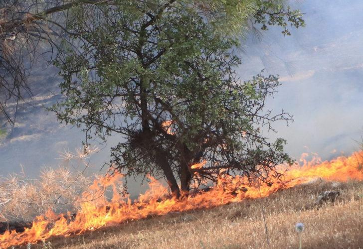 Son dakika! Şanlıurfa'da orman yangını! Bölgedeki 4 noktaya sıçradı