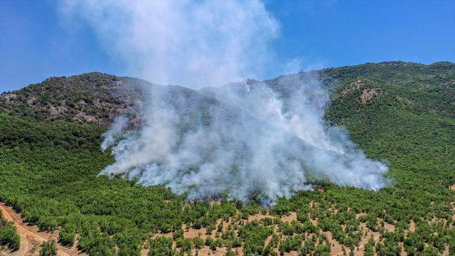 Elazığ'da çıkan orman yangını söndürüldü