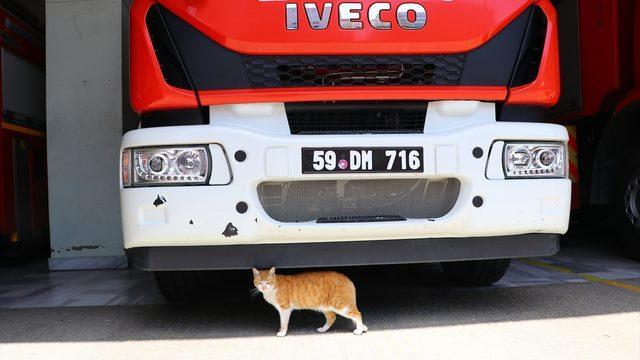 Otomobil motorundan kurtarılan kediler Tekirdağ itfaiyesinin maskotu oldu