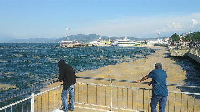 Mudanya kıyılarında müsilaj temizliği sürüyor