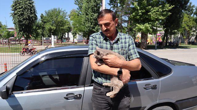 Bolu'da sattıkları aracın motor bölümüne giren kedi yavrusunu Düzce'de teslim aldılar