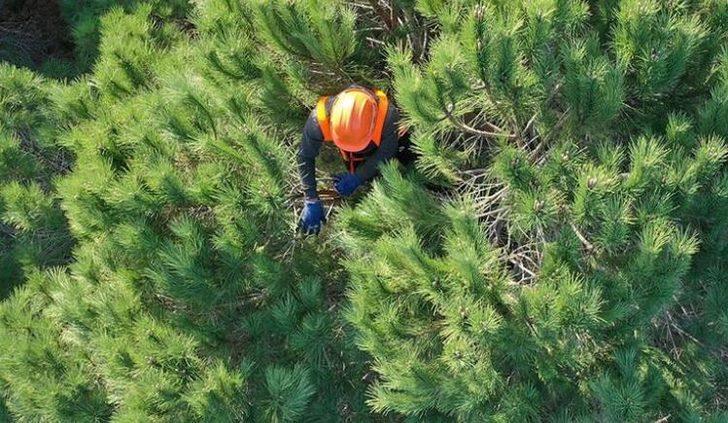 OGM işçi alımı 2021 ne zaman, başladı mı? 2021 Orman Genel Müdürlüğü OGM işçi alımı başvuru şartları neler?