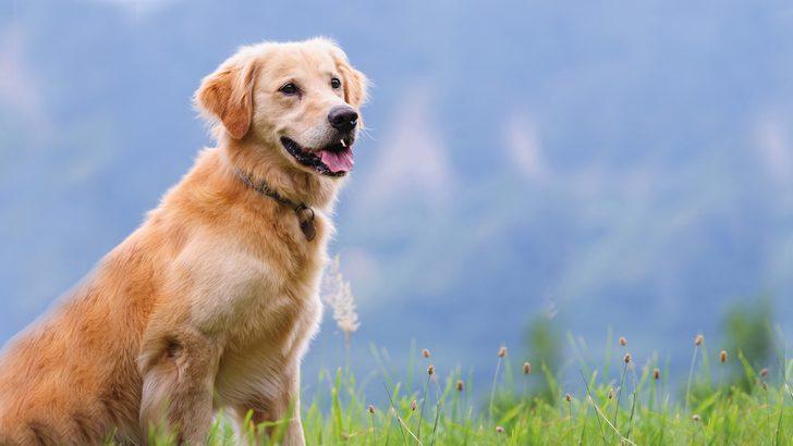 Instagram 'save a dog' bağışı nasıl yapılır? Save a dog paylaşımı kampanyası anlama gelir?