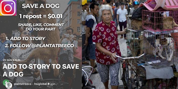 Save a dog ne demek? Save a dog ücretli bağış mı yapılıyor?