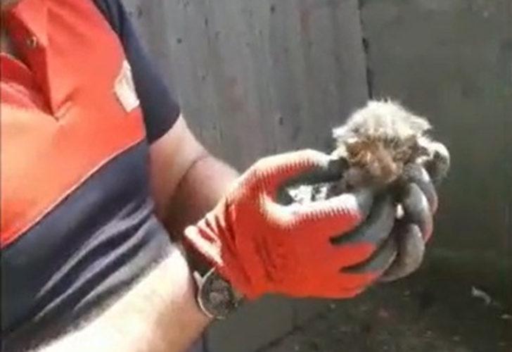 Su borusuna sıkışan 2 yavru kedi kurtarıldı