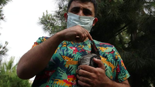 Vefalı karga veterineri bırakmıyor: Muhabbet kuşu gibi oldu