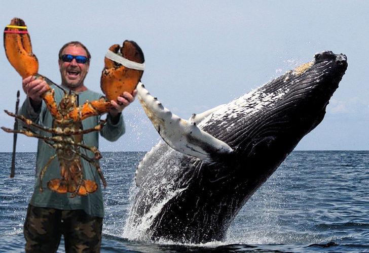 ABD'de kambur balinanın ağzına aldığı dalgıç yem olmaktan kurtuldu