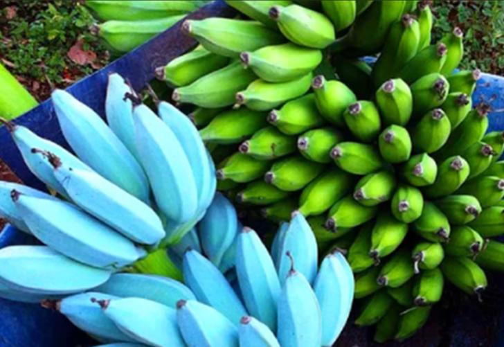 Son dönemlerin popüler meyvesi! Vanilya tadında bir muz hiç yediniz?